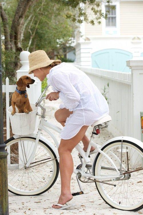 Cesta para perros