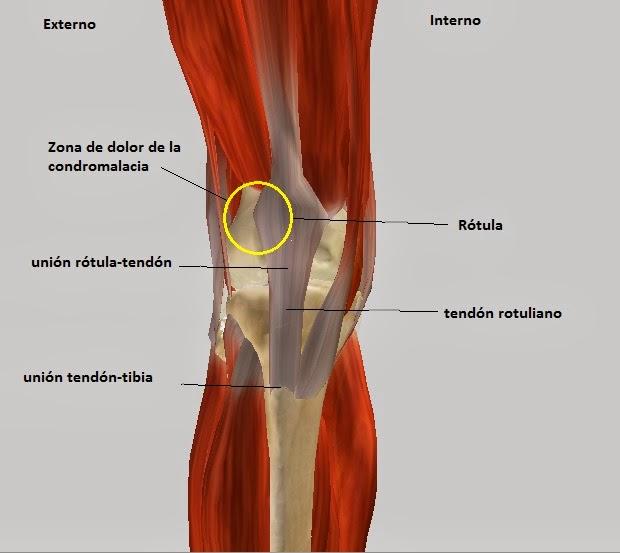 Lesiones m s comunes en ciclistas - Dolor en la parte interior de la rodilla ...